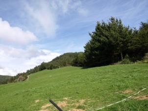 Grazing paddock/glamping site
