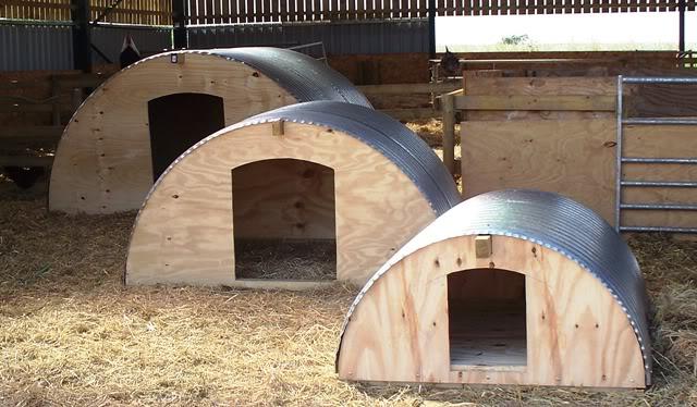 Pig, Ark, Shelter