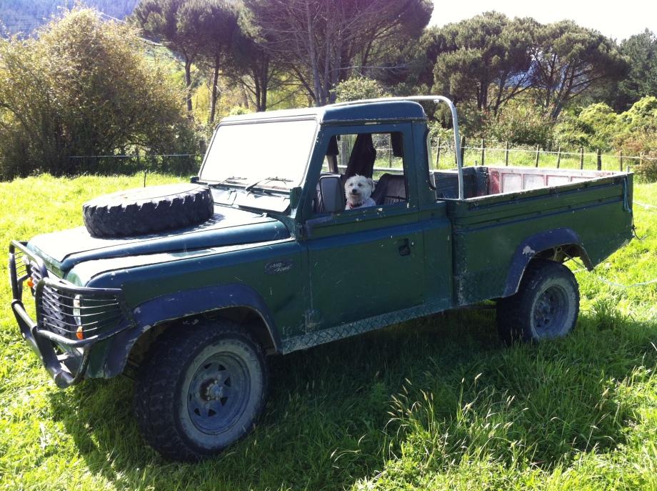 Land Rover, Farm, Dog