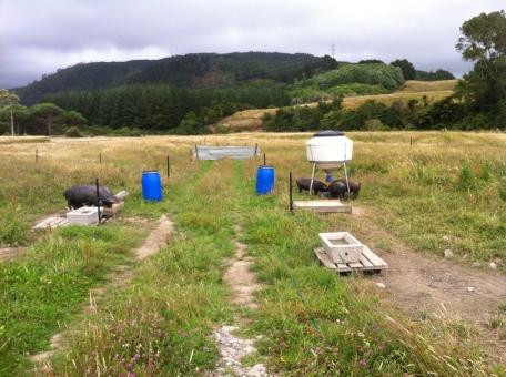 A free range farm