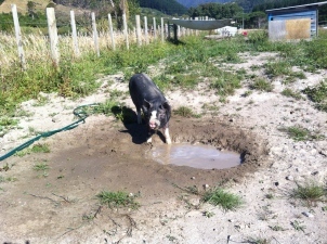 Delia finds the wallow for the first time