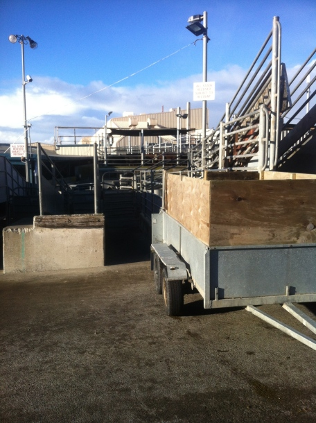 I backed the trailer up to the arrivals lounge at the abattoir in Wanganui