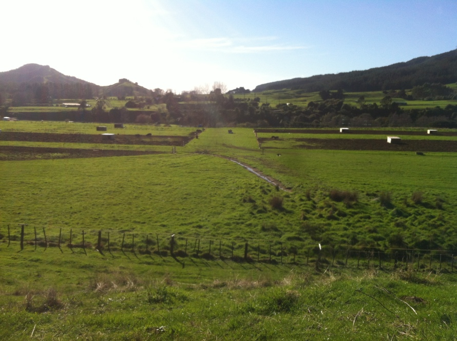 The big breeding paddock, separated into smaller paddocks with electric fence lines.